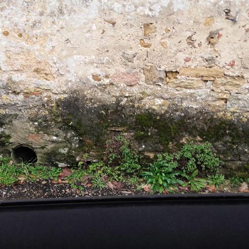 Traitement des remontées capillaires et du salpêtre